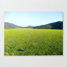 Il Mare Verde Canvas Print