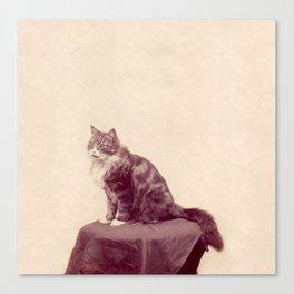 Cat Called Purple Canvas Print
