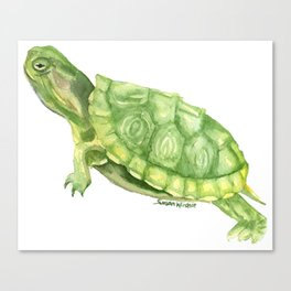 Turtle Watercolor Canvas Print