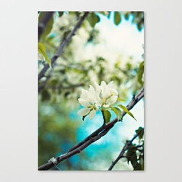 tropical flower. Canvas Print