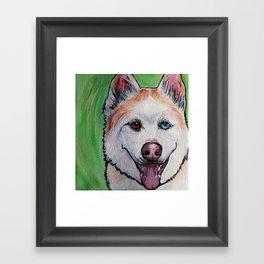 Red Siberian Husky Framed Art Print