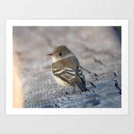 Willow Flycatcher Art Print