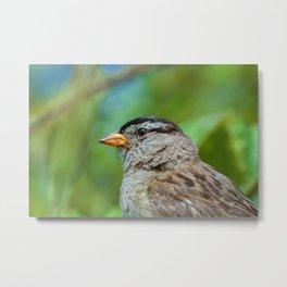 Sparrow the Portrait Metal Print