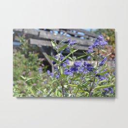 Country Wildflowers Metal Print