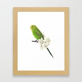 Green & Yellow Budgerigar I Framed Art Print