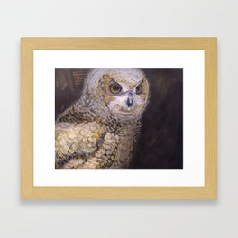 Portrait of an Owl Chick Framed Art Print