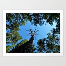 Лес Art Print
