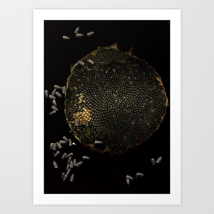 Full Moon Sunflower Art Print