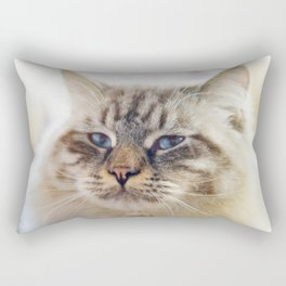 Close-up portrait of blue-eyed Ragamuffin cat Rectangular Pillow