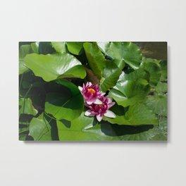 Lotus garden nature photo Metal Print
