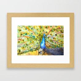 Mother Peacock Framed Art Print