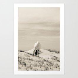 Wild Horses 7 - Black and White Art Print