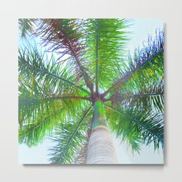 342 - Palm Tree Metal Print