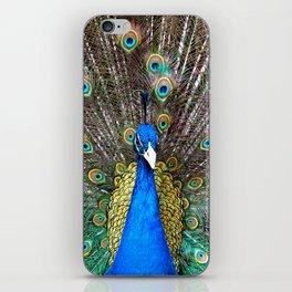 Peacock in Splendor iPhone Skin