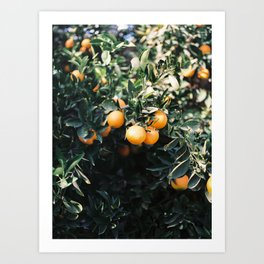 Oranges | Moody colorful travel photography | Botanical green wall with oranges Art Print