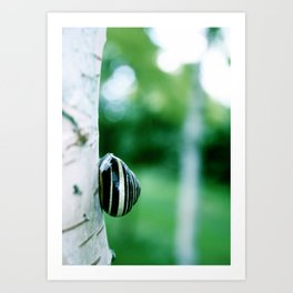 Snail on Silver Birch Art Print