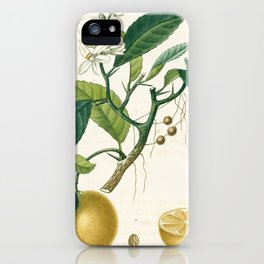 Lemon tree Vintage illustration iPhone Case