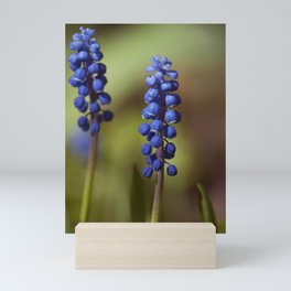 spring lavender Mini Art Print
