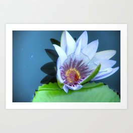 Bahama Flower Art Print