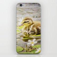 Ducklings iPhone & iPod Skin