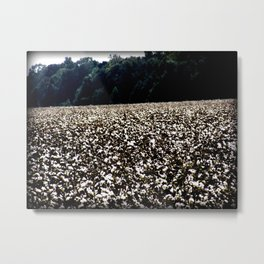 yup,more cotton Metal Print