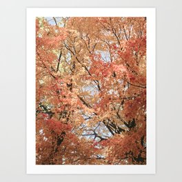 Autumn Leaves II Art Print