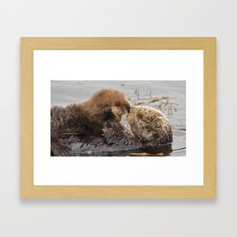 Sea Otter Mom and Pup  Framed Art Print