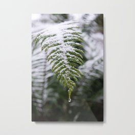 Fern Forest Winter Pacific Northwest Snow II - Nature Photography Metal Print