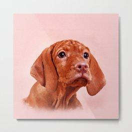 Vizsla puppy- Hungarian pointer Metal Print