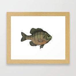 Crappie Framed Art Print