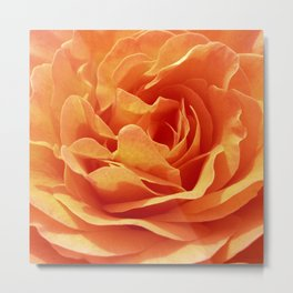 orange rose petals X Metal Print