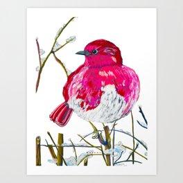 Fat Rose Bird Art Print