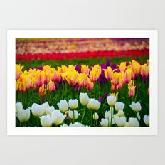 Fields of Color III, Woodburn Tulip Festival Art Print