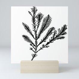 Seaweed 03 Mini Art Print