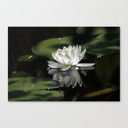 Peaceful Lily Canvas Print