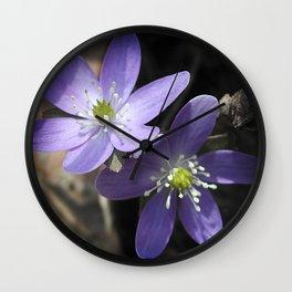 Woodland hepatica, Anemone acutiloba - a sure sign of spring Wall Clock