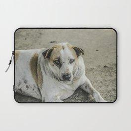 Stray Dog Laptop Sleeve