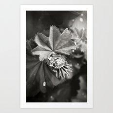 Secret Garden ~ No.11 Art Print