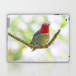Anna's Hummingbird on a Twig Laptop & iPad Skin