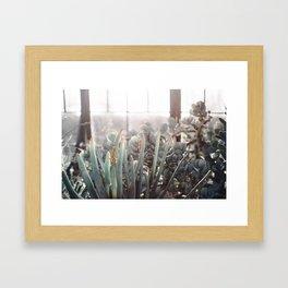 Greenhouse Blues Framed Art Print