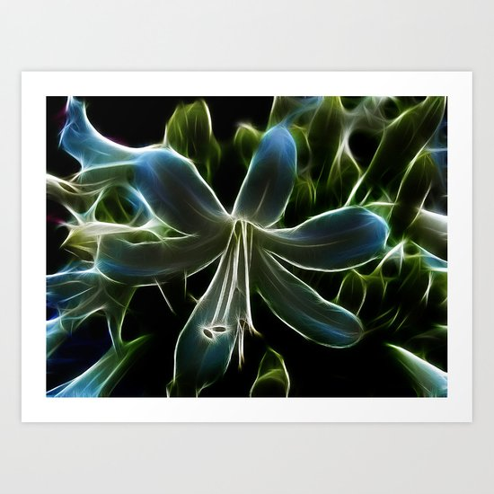 Agapanthus Flower Art Print