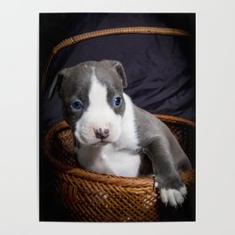 Puppy Eyes Posters Society6