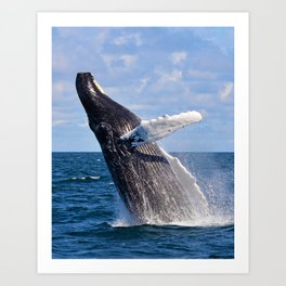Humpback Dreams Art Print