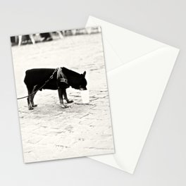 Dog on the street Stationery Cards