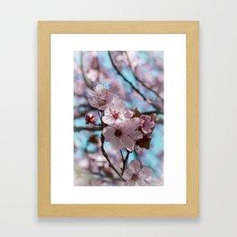 Sakura.Cherry Blossom Framed Art Print
