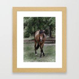 Dark Stallion Framed Art Print