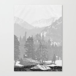 Bear in the mountains Canvas Print
