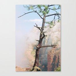 A Pine Against the Sky Canvas Print