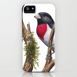 Rose-breasted Grosbeak (Pheucticus ludovicianus) iPhone Case