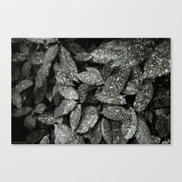 Speckled Leaves Canvas Print